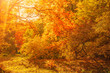 Beautiful Autumn landscape Background. Yellow maple trees, sunbeams and forest path in Autumn Park at sunny day