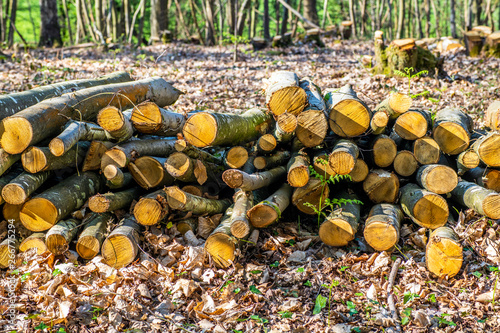 Pile of cut logs in forest at Fore Wood, Crowhurst, East Sussex, England Wallpaper Mural