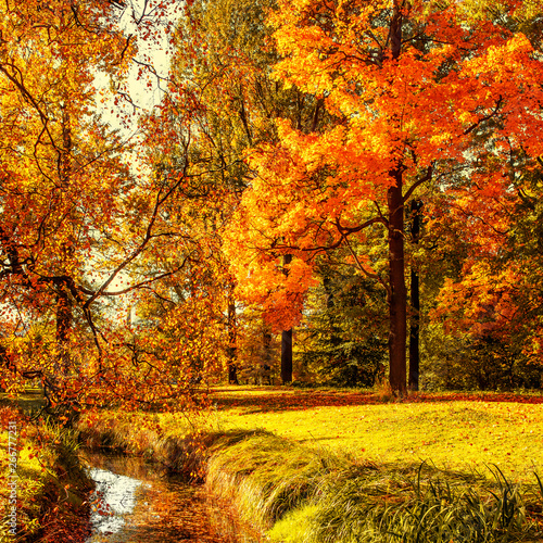 Fotobehang Herfst Autumn. Fall scene. Countryside landscape with red and yellow maple leaves, trees and meadow. .