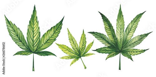 Watercolor illustration. Marijuana leaves on a white background. Canvas Print