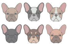 Vector Drawings Of French Bulldog Dog Heads With Different Fur Colors And Patterns Like Fawn, Black Pied, Red And Tan