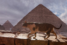 The Cat Walks Along The Trail Against The Backdrop Of The Mountain Of Moses In Egypt