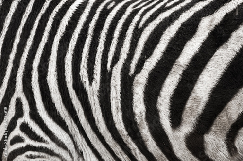 Poster Zebra Photo of the Zebra Skin Fur Texture Background