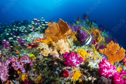 Foto Beautiful, colorful soft corals on a tropical reef at Black Rock, Mergui Archipe