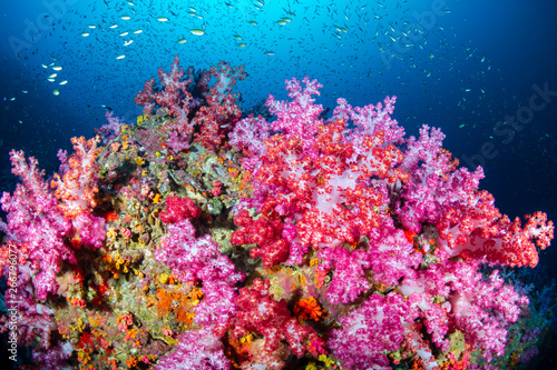 Poster Coral reefs A vibrant, colorful tropical coral reef in Asia