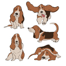 Collection Of Basset Hound Dog...