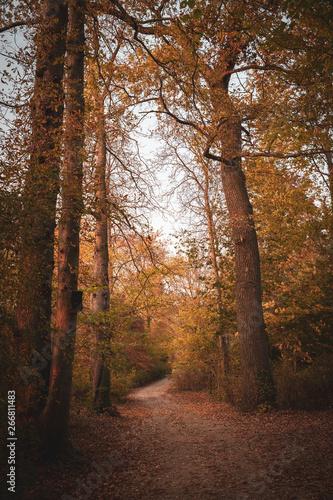 Foto op Plexiglas Cappuccino Waldweg im Herbst