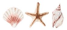Watercolor Set For Your Design. Seashells And Starfish In Pastel Colors Isolated On White Background.