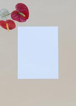 Blank Cardstock Paper On Beige...
