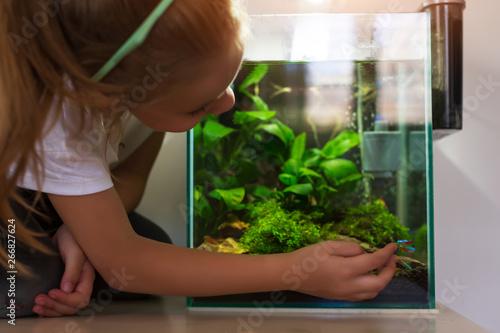 Fotografie, Obraz  Cute little girl looking at fish in nano aquarium