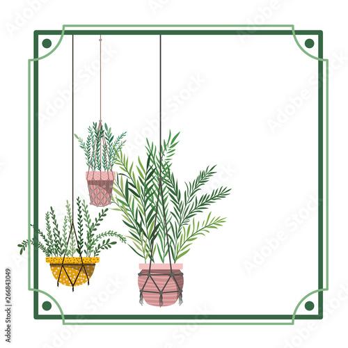 Foto op Canvas Vogels in kooien frame with houseplants on macrame hangers