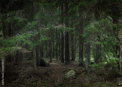 Old forest landscape in spring