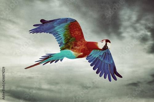Poster Geometric animals Guacamaya flying in the sky