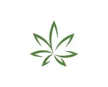 Canabis Leaf Vector Illustration