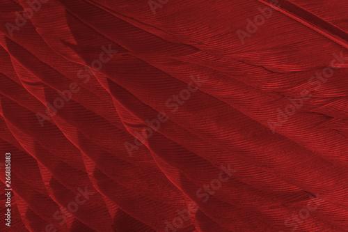 Photo  Beautiful dark red maroon feather pattern  texture background