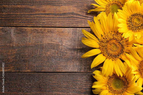 Many beautiful bright yellow sunflowers on a brown wooden background. top view with a place for inscription - 266892802