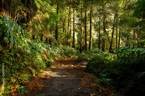 Magic Forest Dawn Light.