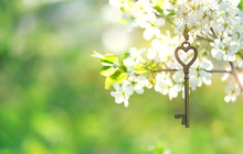 Vintage Gold Key On Branch Of  Blossoms Cherry. Spring Time Natural Background. Key And Flowers. Secret Garden. Still Life Spring Blossom Season. Romantic Scene. Soft Focus, Copy Space