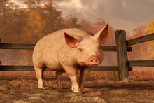 A Pink Pig Stands In It's Muddy Pen And Looks Back At You.  It's A Warm Autumn Day, And The Pig Seems Rather Happy. Behind The Wooden Fence Of The Pig Pen Is A Forest Of Autumn Trees. 3D Rendering