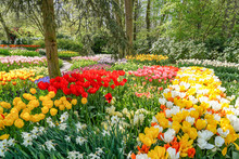 A Spring Spectacle With Tulips, Daffodils, Hyacinths And Muscari In Many Colors