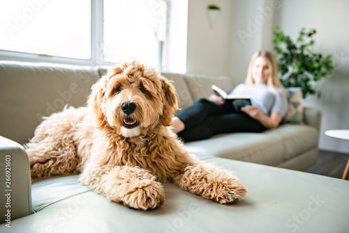 Photo  woman with his Golden Labradoodle dog reading at home