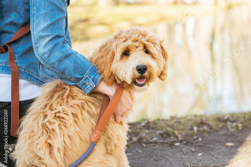 Happy Labradoodle Dog and woman outside at the park Canvas Print