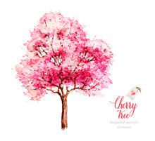 Cherry Tree Blossom. Watercolor Tree. Sakura. Watercolor Botanical Illustration. Nature.