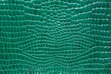 Crocodile Skin Green Color, Perfectly Will Be Suitable For Any Design Purposes.