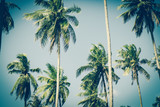 Coconut palm trees in sunset light. Vintage background. Retro toned poster. - 266935009