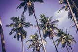 Coconut palm trees in sunset light. Vintage background. Retro toned poster. - 266935224