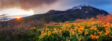 Sprind Sunset Wildflowers Abov...