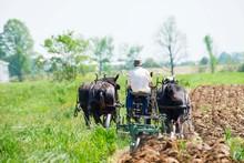 Amish Farmer Plowing Field Wit...