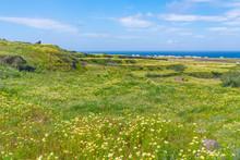 Rural Santorini Landscape Near Oia With Wild Flowers And Aegean Sea, Greece