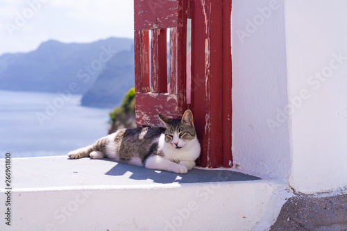 Montage in der Fensternische Santorini A tabby cat relaxing on white wall in Oia. Stray cats in Santorini, Greece