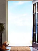 Dog Looking Out Open Door