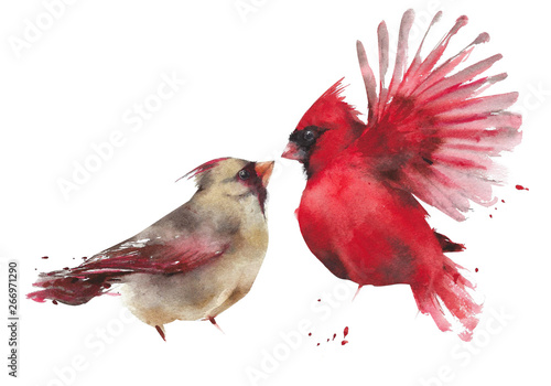 Photo  Bird couple northern cardinal male female watercolor painting illustration isola
