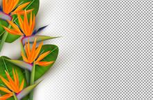Bird Of Paradise Flower 3d Transparent Background