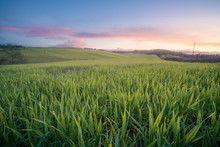 Panoramic View Of Beautiful Endless Green Fields In Bright Sunlight, Italy
