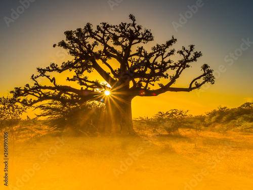 Photographie Silhouette of baobab