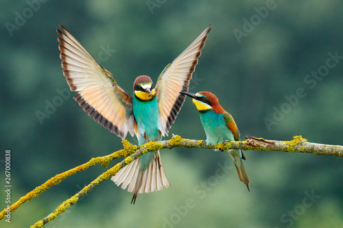 Montage in der Fensternische Vogel European bee-eater (Merops apiaster).