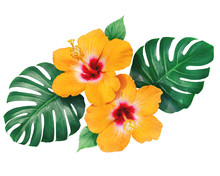 Bright Orange Hibiscus Flowers With Monstera Leaves Isolated On White Background