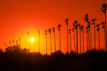 Palm Trees Against Beautiful S...