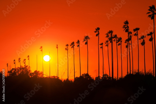 Staande foto Rood traf. Palm trees against beautiful sunset in Los Angeles, California