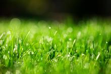 Green Grass Close-up Background