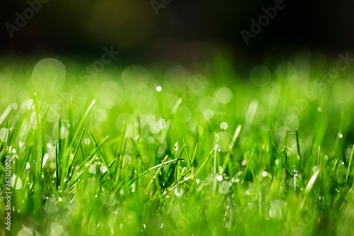 Photo sur Toile Herbe green grass background
