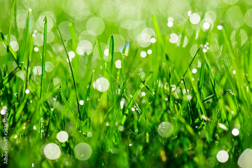 Poster de jardin Herbe green grass with water drops in sunlight
