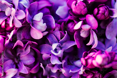 Foto op Aluminium Lilac Purple lilac flowers background