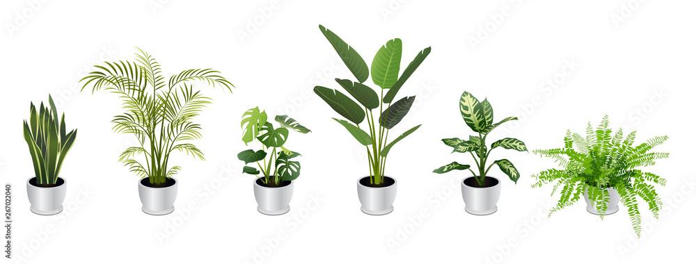 Fototapeta Set of Tropical Houseplants in White Pots