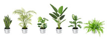 Set Of Tropical Houseplants In...