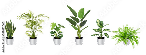 Leinwand Poster Set of Tropical Houseplants in White Pots